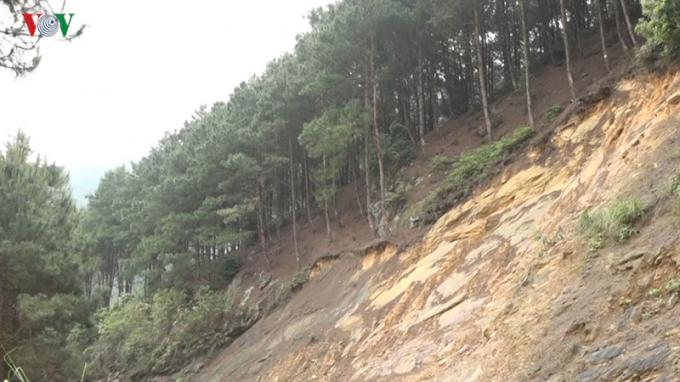 Khi những đồi thông trơ trụi, nguy cơ sạt lở đường lên Mẫu Sơn khi mùa mưa lũ là rất lớn.
