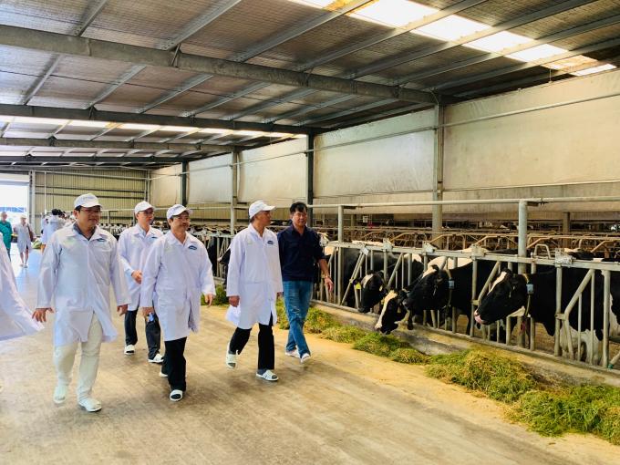 """Ông Phùng Đức Tiến - Thứ trưởng Bộ NN & PTNT, ông Phạm Văn Đông – Cục trưởng Cục Thú y và đoàn công tác tham quan """"Resort"""" bò sữa đạt chuẩn Global G.A.P của Vinamilk tại Tây Ninh."""