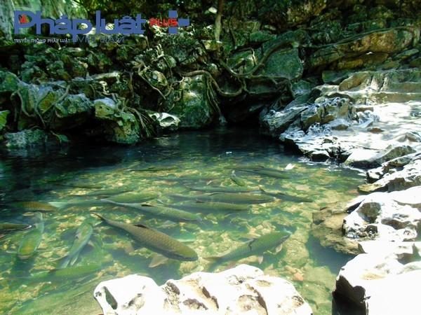 Cá tập trung rất đông tại cửa hang.