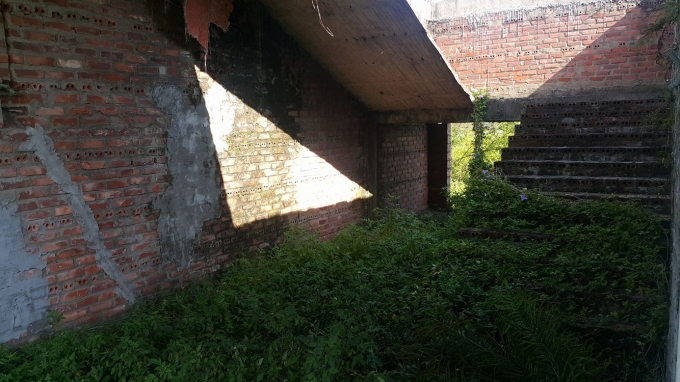 Tường mọc rêu, nền nhà cỏ dại mọc um tùm.
