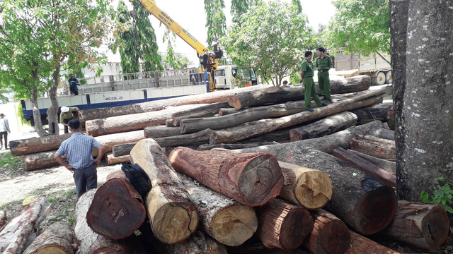Số lượng gỗ lậu