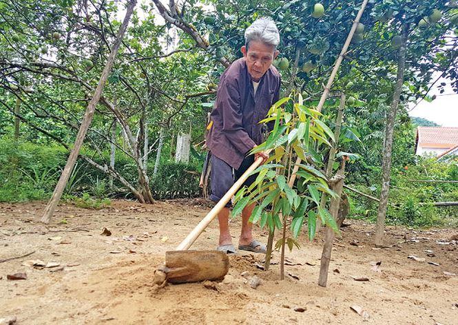86 tuổi, nhưng cụ Ngô Bốn vẫn khỏe mạnh trồng cây, cuốc đất. Ảnh: Hoài Văn.