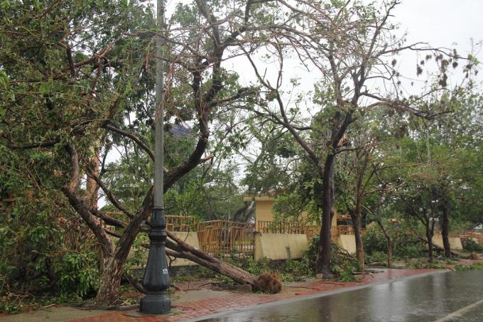 Cảnh hoang tàn trước bảo tàng tổng hợp Quảng Bình.