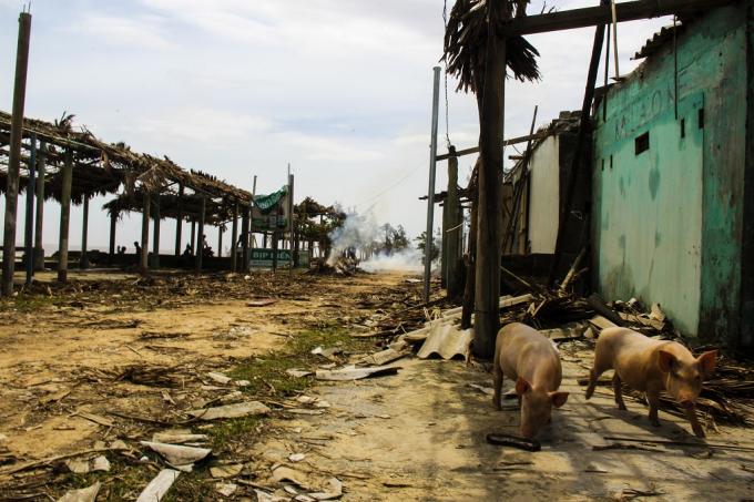 Lợn, gà, gia súc không còn nơi để trú ẩn.