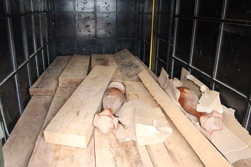 22 hộp gỗ (nhóm 3) bị bắt trên đường di tiêu thụ. (Ảnh. MT&CS).