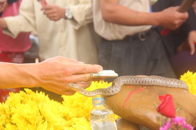 Người dân quẹt tiền vào người rắn để lấy