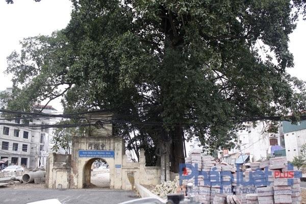 Cổng làng và cây đa án ngữ trên đường nghìn tỷ