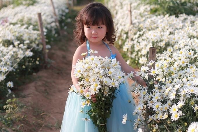 Loại hoa cúc họa mi, với nhụy hoa vàng rực cùng vô số cánh là biểu tượng của sự sống, là ước mơ trường tồn, là khát vọng về một thời thơ ấu mà ai cũng đã trải qua.