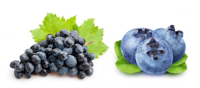 Chiết xuất việt quất và hạt nho đen trong thực phẩm bảo vệ sức khỏe giúp bạn tăng cường thi lực.