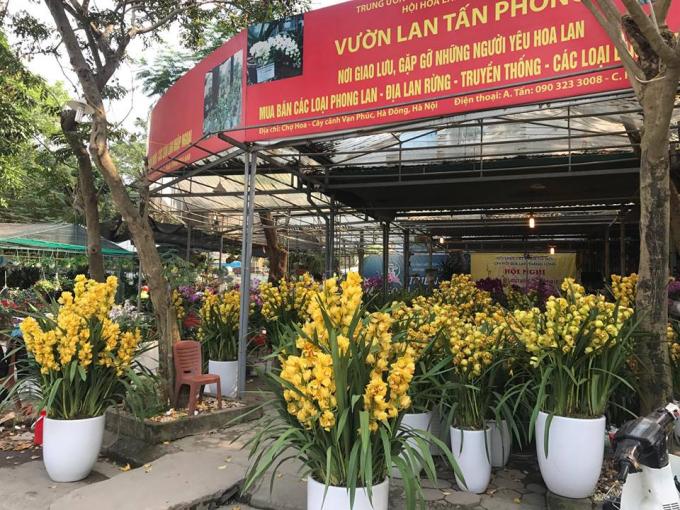 Hoa địa lan Đà Lạt với sắc vàng
