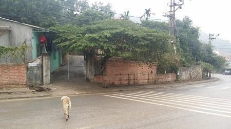Bãi đất mà UBND TP Hạ Long chuẩn bị cưỡng chế.
