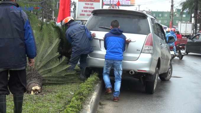 Vụ tai nạn làm 2 cây vạn tuế lâu năm bị đốn ngã.