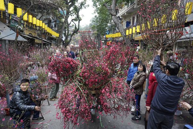 Chợ hoa khu phố Hàng Lược đỏ rực sắc đào những ngày cận Tết. Người bán đông, khách tham quan, mua sắm lại càng đông, trong khi những chuyến xe chở hoa nối đuôi nhau đổ về chợ.