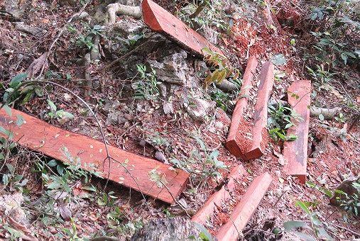 """Một khu vực khai thác gỗ mun trái phép giữa rừng của """"lâm tặc"""" ngổn ngang như bãi chiến trường."""