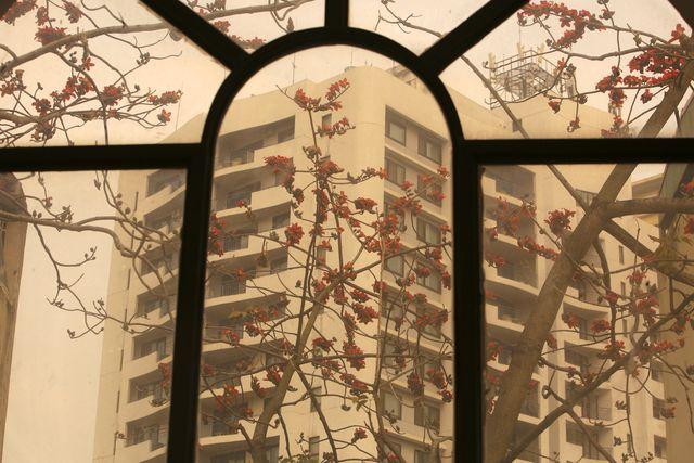 Những chùm hoa gạo được nhìn thấy từ ô cửa kính cho cảm giác hoài cổ.