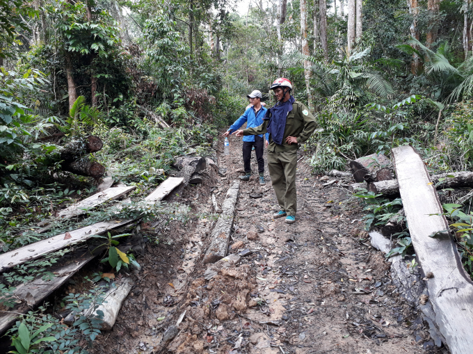 Đường đi trong rừng do lâm tạo ra để khai thác gỗ tại tiểu khu 703 do Công ty LN Ea Kar quản lý bảo vệ.