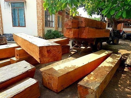 Gỗ rừng tại tiểu khu 702 bị lâm tặc chặt hạ tạm giữ tại UBND xã Cư Bông.