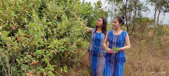 Không riêng Ka Uyên, Ka Thắm và nhiều thôn nữ buôn Đạ Nha cũng mê đắm những đồi sim mang sắc tím bên triền núi.