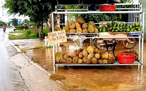 Một điểm thu mua hạt sầu riêng ở Lâm Đồng. Ảnh:Khánh Hương.