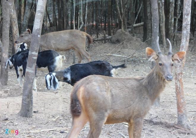 Thú nuôi ở Vinpearl safari Phú Quốc. Ảnh:Việt Tường.
