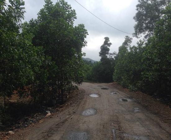 Con đường độc đạo giữa rừng dẫn vào