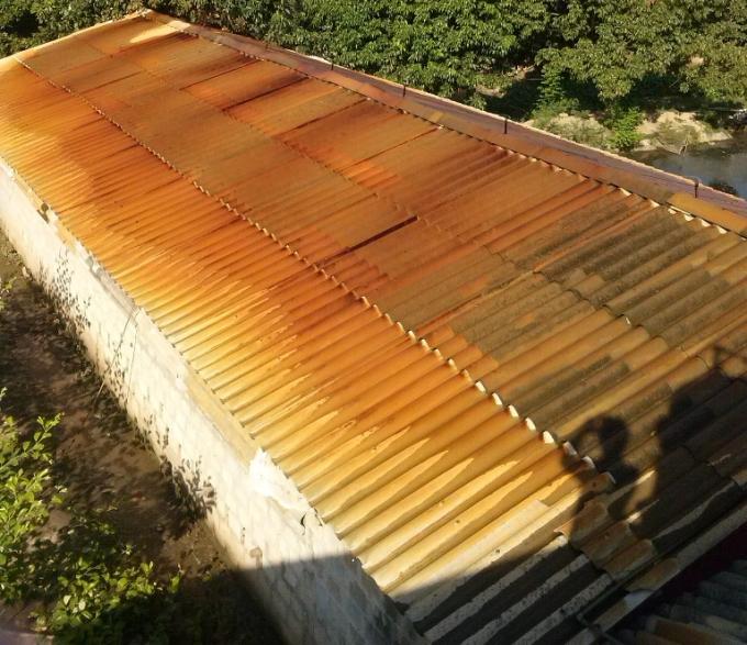 Mái lợp bờ lô xi măng nuôi lợn chuyển thành màu vàng sau khi được tưới nước làm mát