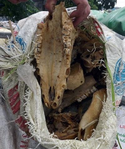 Nhiều bao tải chở xương thối đã bốc mùi nồng nặc