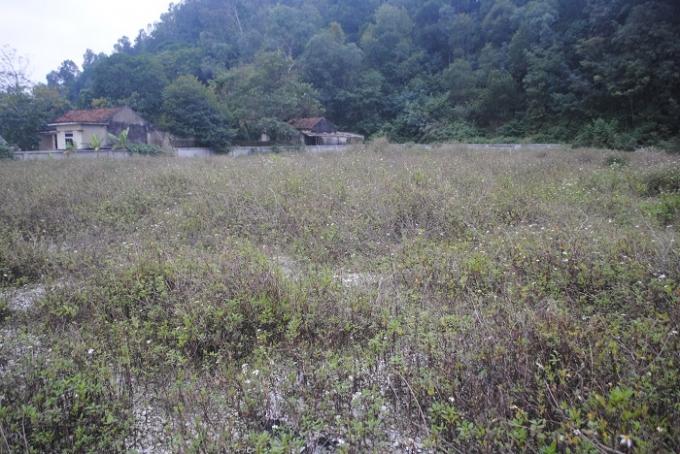 Bên trong Di chỉ khảo cổ học hệt như một bãi đất hoang, cỏ dại mọc um tùm (ảnh Duy Ngợi).
