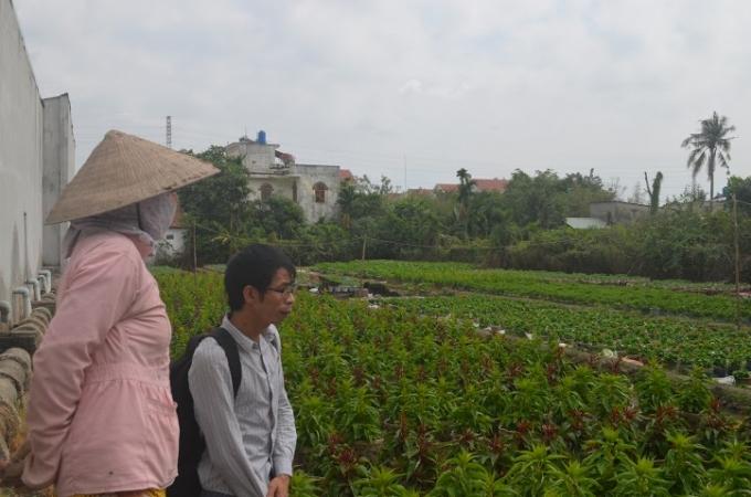 Theo chị Hà, gia đình ch trồng hoa 15 năm nay, 3 tháng cuối năm anh chị gác mọi việc để chăm hoa kịp Tết. Năm nay chị trồng được 7000 chậu hoa.