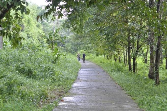 Dự án đường giao thông trong vùng lõi VQG Cát Tiên.