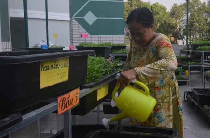 Các cô giáo rất hào hức khi vườn rau lớn nhanh mơn mởn, chờ ngày thu hoạch.