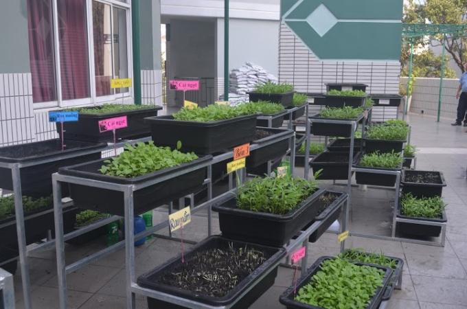 Đây là vườn rau do tự tay các thầy cô giáo và các em học sinh gieo trồng, chăm sóc và thu hoạch.