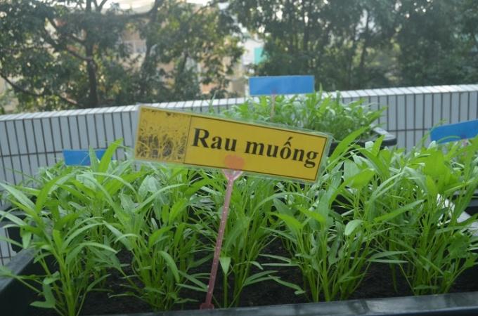 Trong thời gian đến, rau nhà trường trồng sẽ được đưa vào bếp phục vụ lại cho các bé trong bữa ăn.