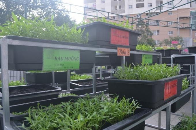 Trường Tiểu học Nguyễn Văn Trối (số 02, đường Vĩnh Khánh, Phường 9, quận 4, TP HCM) đã có một cách làm hay khi đưa mô hình vườn rau thân thiện vào nhà trường.
