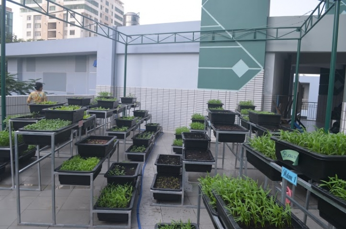 Vườn rau sau 3 tuần đã đi vào vụ thu hoạch đầu tiên trong niềm phấn khởi của thầy trò nhà trường.