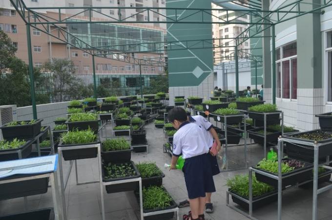 Ý tưởng ra đời vườn rau thân thiện được cô Phạm Thúy Hà - Hiệu trưởng nhà trường nung nấu từ rất lâu.