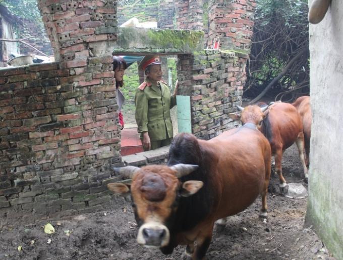 Cuộc sống chăn bò, nuôi mèo của dị nhân.