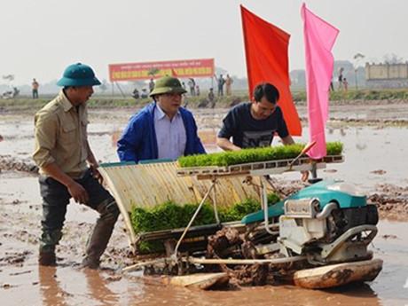 Tân Bí thư Hà Nội Hoàng Trung Hải (giữa) xuống ruộng cấy lúa cùng nông dân.