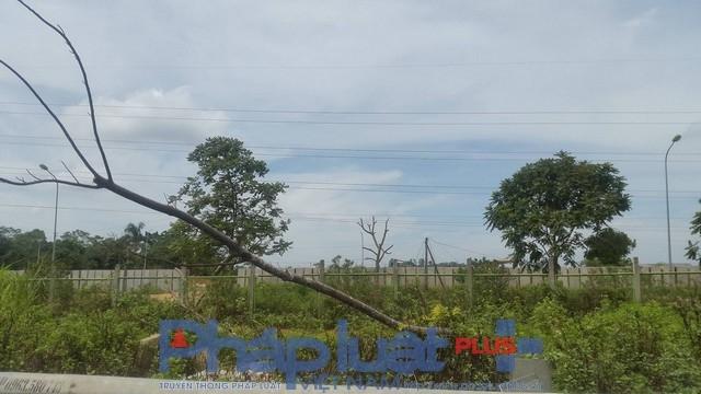 Cây đổ khiến tuyến đường trở nên nhếc nhác mất mỹ quan. Theo Sở Xây dựng Hà Nội thì vấn đề chậm khắc phục là do số lượng cây đổ quá nhiều, khắc phục không kịp!.
