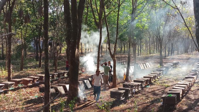 Hiện đã có nhiều nông hộ, doanh nghiệp đầu tư phát triển đưa nghề nuôi ong trở thành ngành nuôi ong mật hàng hóa góp, phần tăng thu nhập nâng cao đời sống cho đồng bào các dân tộc trên địa bàn.