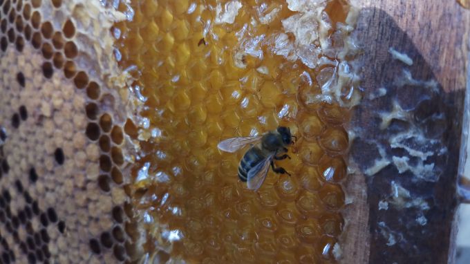 Về Đắk Lăk ngắm mùa quay ong