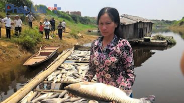14 tấn cá lồng của hơn 20 hộ dân tại Thành Vinh, Thạch Cẩm đã chết do ô nhiễm, khiến nhiều gia đình rơi vào cảnh nợ nần. (Ảnh: A.Thắng)