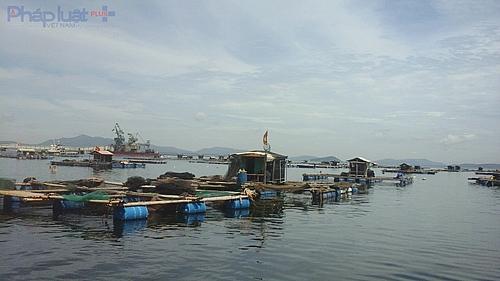 Trong số 66 hộ nuôi cá lồng có ảnh hưởng, thì 21 hộ dân bị thiệt hại cực kỳ nặng nề. (Ảnh: A.Thắng)