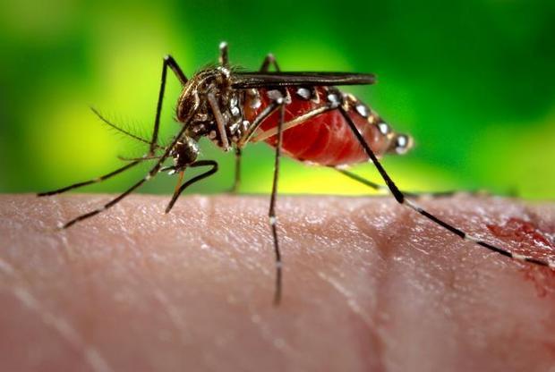 Trung tâm Y tế dự phòng Thanh Hóa khuyến cáo người dân diệt muỗi, làm vệ sinh môi trường, diệt bọ gậy, nằm màn...nhằm ngăn chặn nguy cơ lây lan dịch sốt xuất huyết.