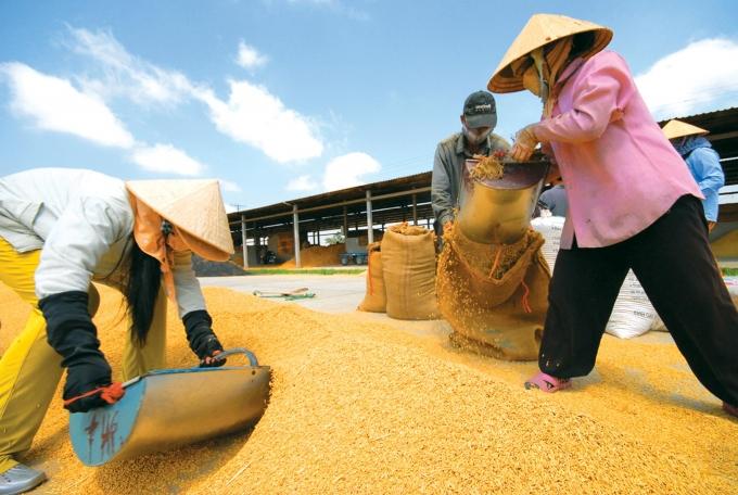 lHiện cả Vinafood 1 và Vinafood 2 chủ yếu hoạt động như những nhà buôn thuần túy mà chưa thực hiện được vai trò hỗ trợ nông dân.