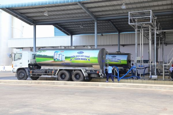 Nhà máy đang tiếp nhận sữa tươi nguyên liệu từ các xe bồn chuyên dụng, chuẩn bị đưa nga vào sản xuất.
