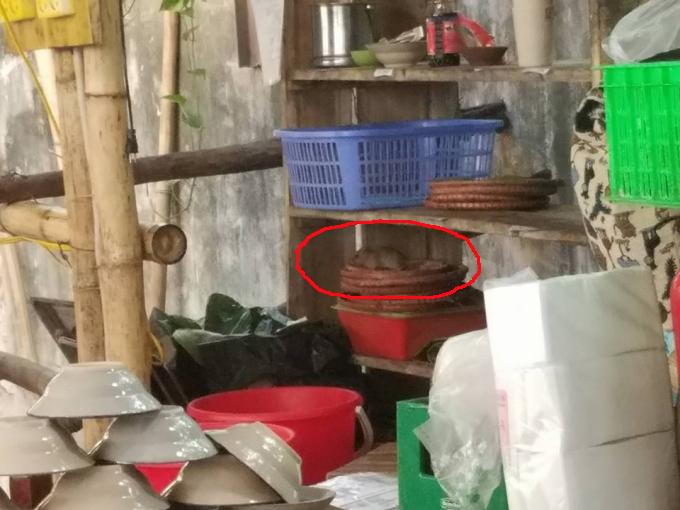 Mẹt đựng đồ ăn của nhà hàng này được các chú chuột ghé thăm, liếm láp tiềm ẩn nguy cơ dịch bệnh cho khách hàng.