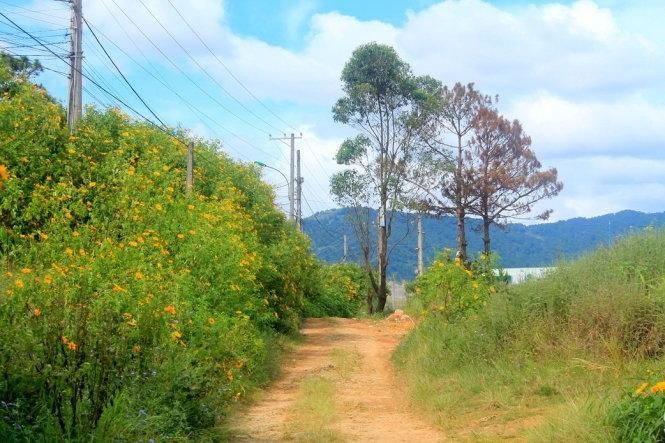 Khu vực ngoại thành Đà Lạt tập trung nhiều hoa dã quỳ hơn - Ảnh: Xuân Lộc.