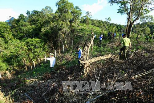 Lực lượng chức năng kiểm tra diện tích rừng mới bị chặt phá. Ảnh: Phan Tuấn Anh/TTXVN