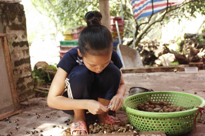 Bé Sao (12 tuổi) mỗi ngày có thể xoáy từ 20 - 30 kg nhãn.              Em Như (16 tuổi) tranh thủ được nghỉ học buổi chiều, em phụ bà xoáy long.